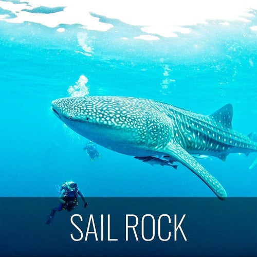 Diving Koh Tao - Sail Rock & whale shark - kohsamui.tours