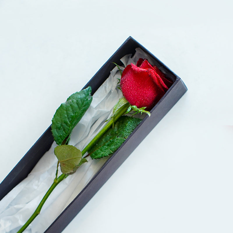 Single Rose in a Box - Intense For You...