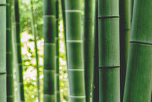 Load image into Gallery viewer, Himalayan Bamboo