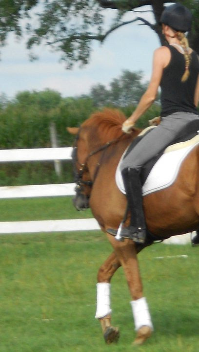 First Steps in Training a Young Horse, an OTTB, or a Highly Sensitive Horse