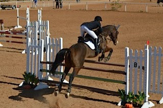 Show Jumping Pine Top Eventing