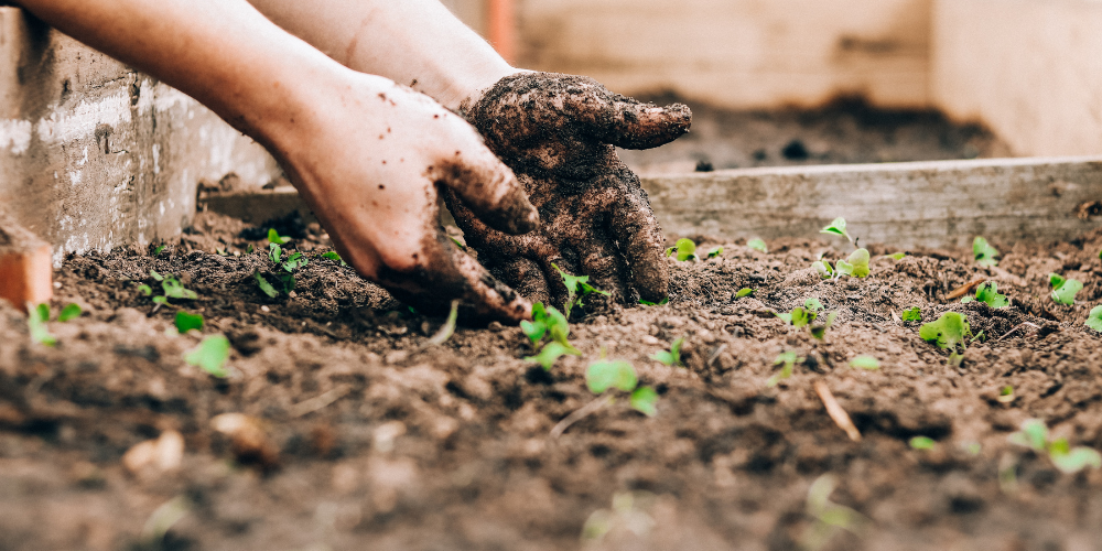 gardening at glory and steel