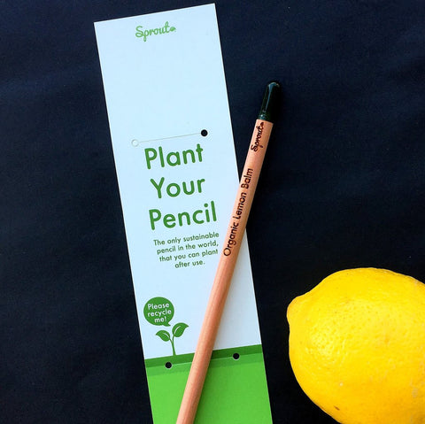 Sprout Pencils - single