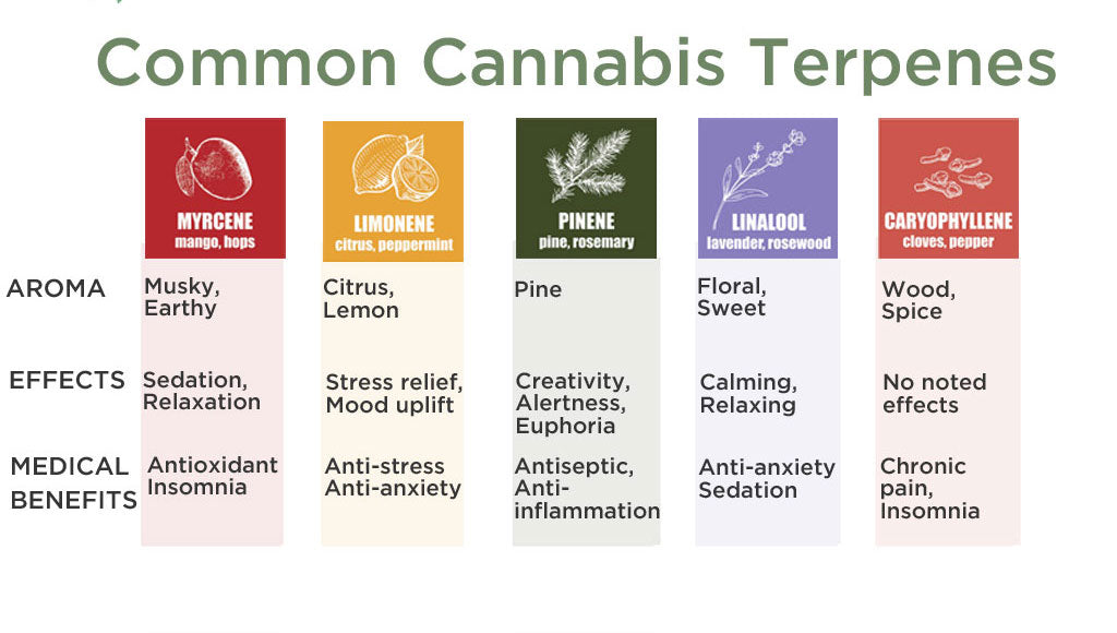 Cannabis Terpenes: What They Are and What They Do
