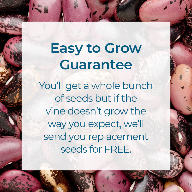 Easy to grow guarantee. You'll get a whole bunch of seeds but if your play tent doesn't grow as expected, we'll send you replacement seeds for FREE.