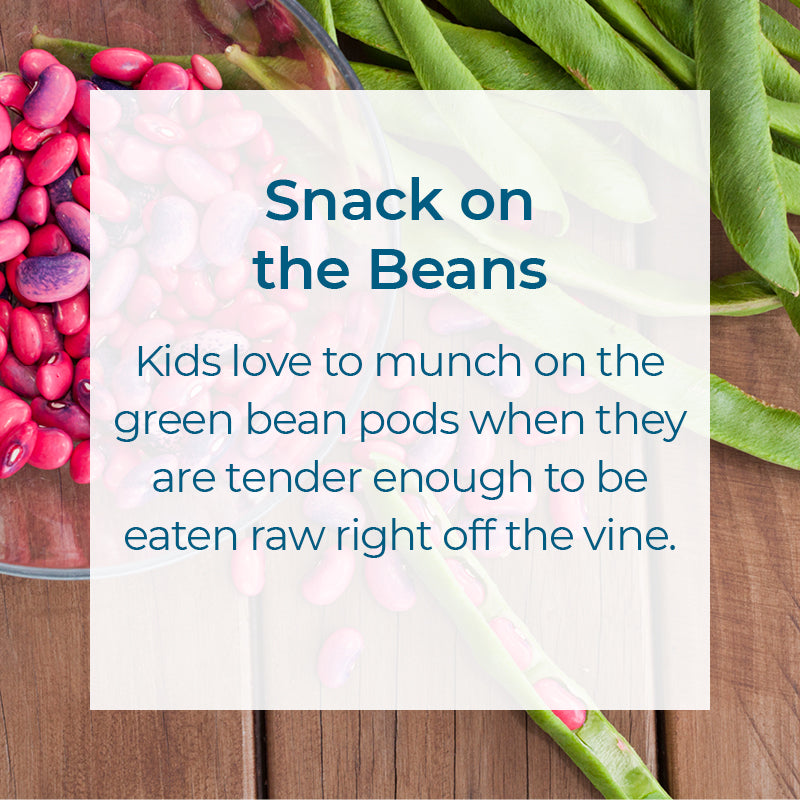 Healthy snack - eat the green bean pods when they are tender on the vine