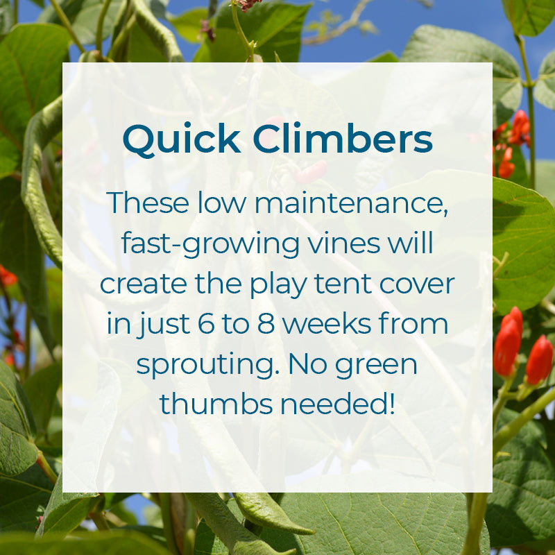 Quick Climbers. Low maintenance fast growing vines create a play tent cover in weeks