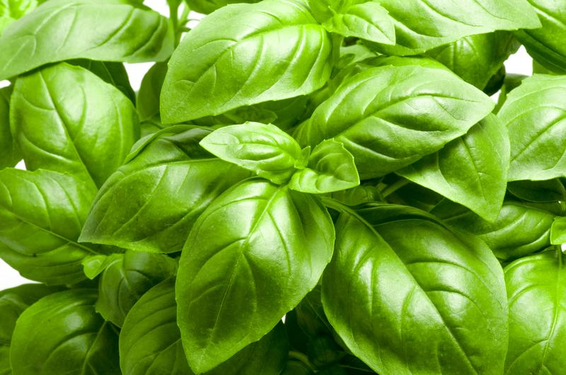 BASIL SEEDS , ITALIAN LARGE LEAF, HEIRLOOM, ORGANIC , NON GMO SEEDS, GREAT FOR FRESH/ DRIED HERB