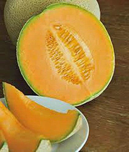 Cantaloupe Seed, Hales Best Jumbo, Heirloom, Organic, Non Gmo,seeds, Melon