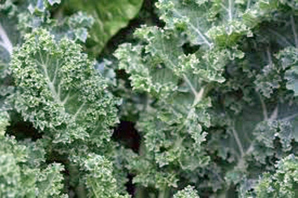 Kale, Dwarf Siberian, Organic  Seeds, Non-gmo, Great For Salads, Stir Fry