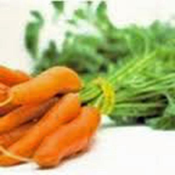 Carrots, Little Finger, Heirloom, Organic Non Gmo Seeds, Delicious Carrot
