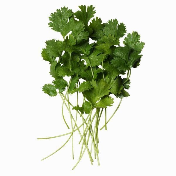 Cilantro, Slow Bolt, Heirloom, Organic , Non Gmo Seeds, Great Fresh Or Dried Herb