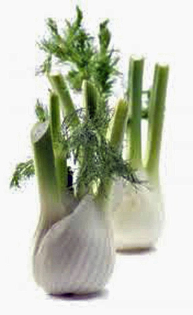 Fennel Seed, Florence Fennel, Heirloom, Organic, NON-GMO SEEDS