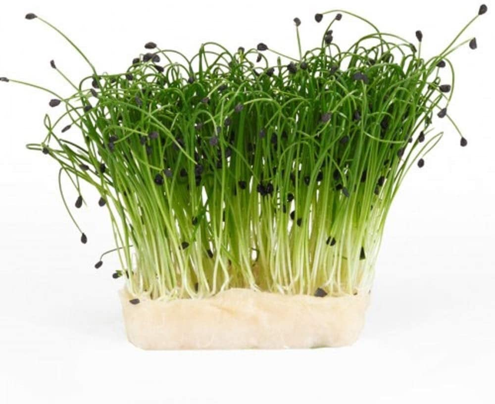 Garlic Chives Sprouting Seeds- Organic, Non-GMO Sprouting Seeds - Microgreens, Garden Planting, or planters Country Creek LLC. Brand.