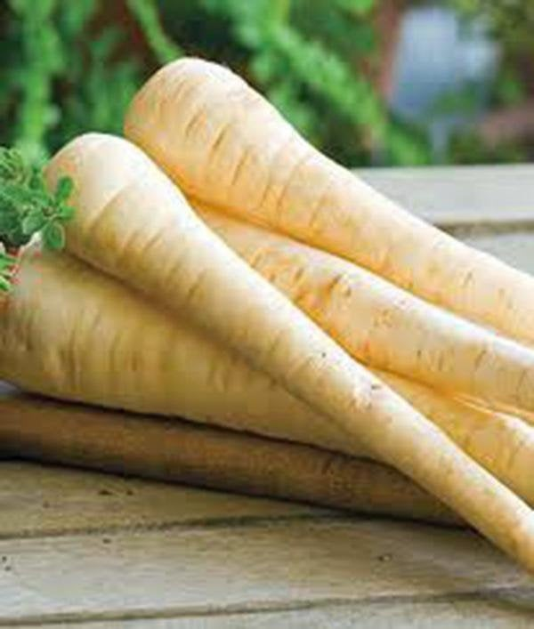 Parsnip, Harris Model, Heirloom, Organic Seeds, A Healthy Tasty Root Veggie
