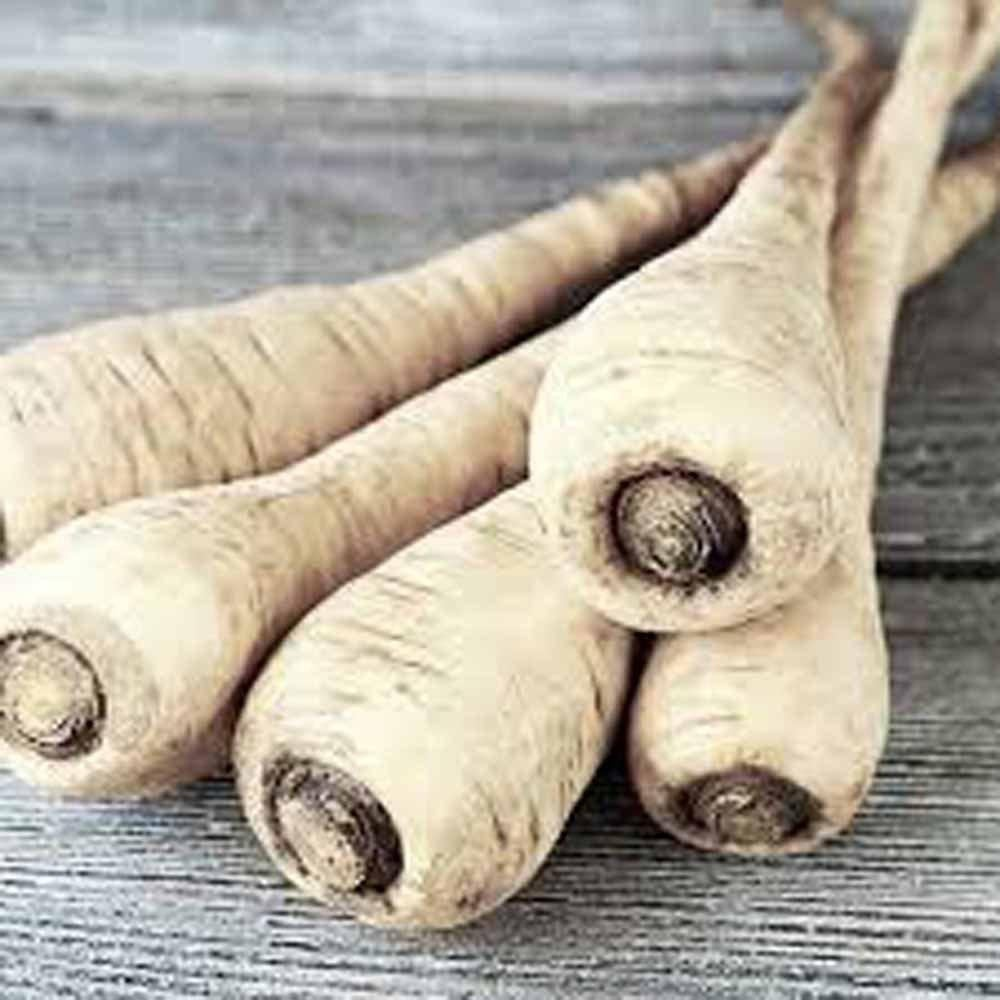 Parsnip, Hollow Crown Seeds, Organic, NON GMO Seeds ,Sweet white flesh has good flavor and keeps well over winter.