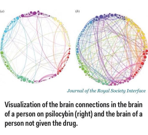 neural connections on psilocybin
