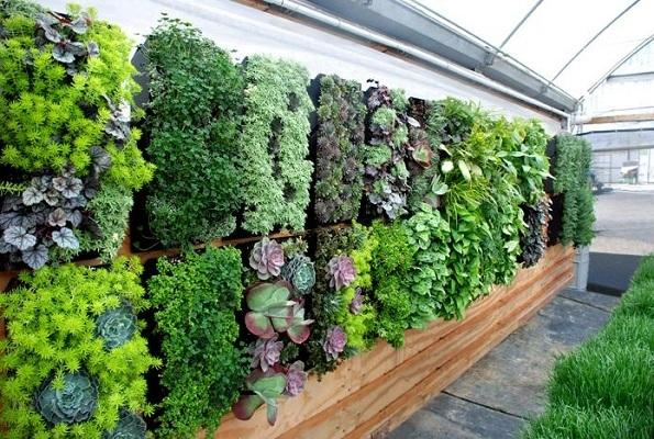 Create more space for growing plants in your own way – beautiful DIY ideas for indoor vertical gardens