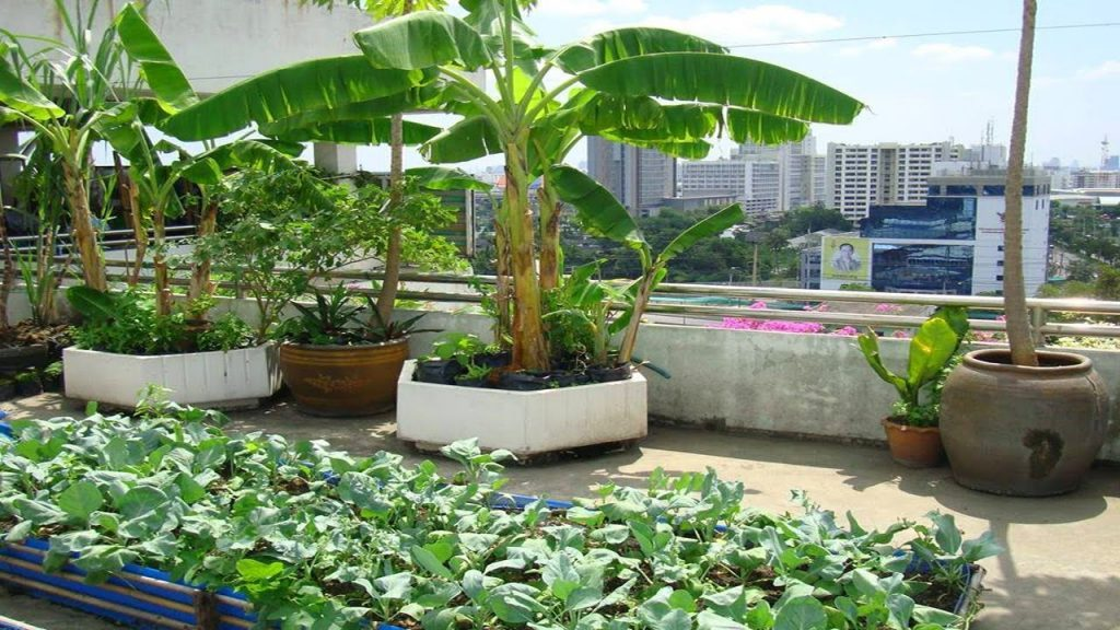 5 Top Secrets to creating the most amazing Terrace or Rooftop Gardens – From Lifewall Vertical Gardens