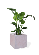 Load image into Gallery viewer, Cube Shaped Non-LED Planter