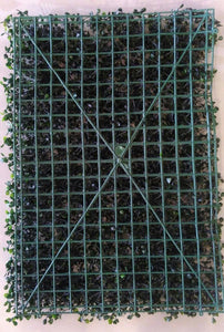 Artificial Plant Panels With Small Leaves and Purple Flowers - 50 CM x 50 CM