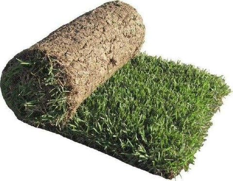 Chinese Natural Carpet Grass (In Sqft)