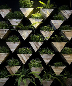 Pinewood Wall Mounted Triangular Planters with Ferns & Plants