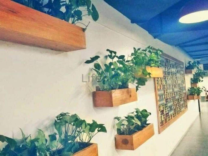 Pinewood Natural Vertical Garden System (In Sqft)
