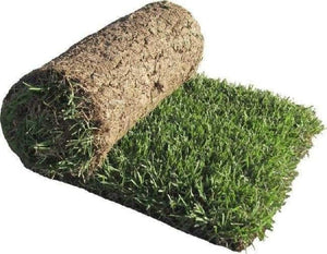 Selection No. 1 Carpet Grass (In Sqft)