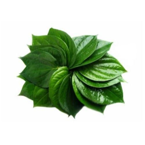 Beetle/Pan Leaves - 5 Ct