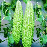 <b>Bitter Melon</b><br />Vitamins C, B's, phosphorous and iron<br />Contains active compounds said to stabilize blood sugar