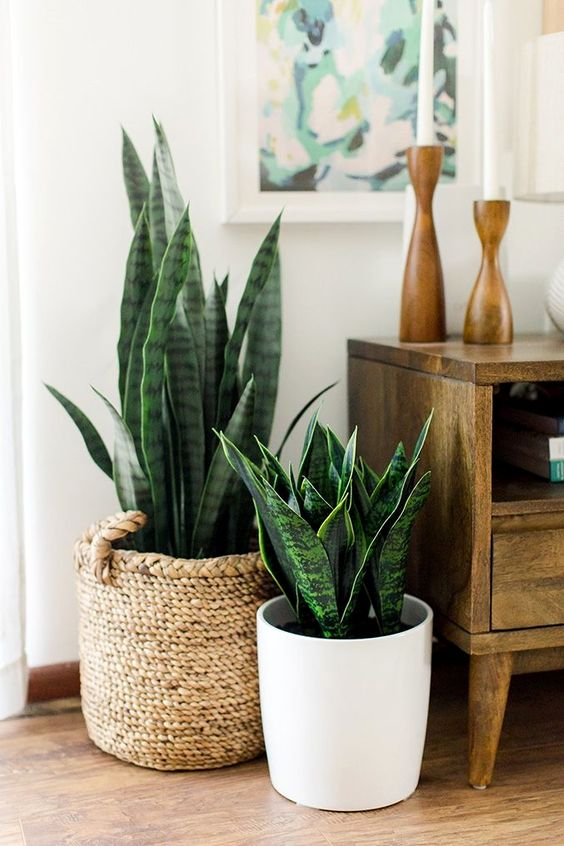 PullCast's Guide to House Plants