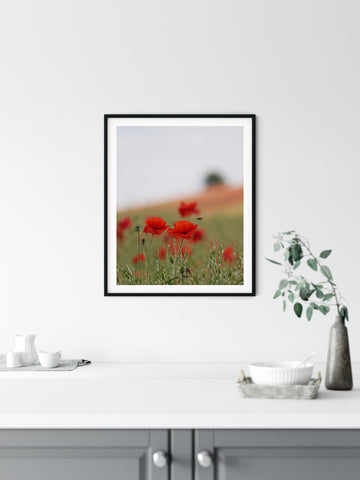 Poppy by 2  - Poppy Fields in the Cotswolds