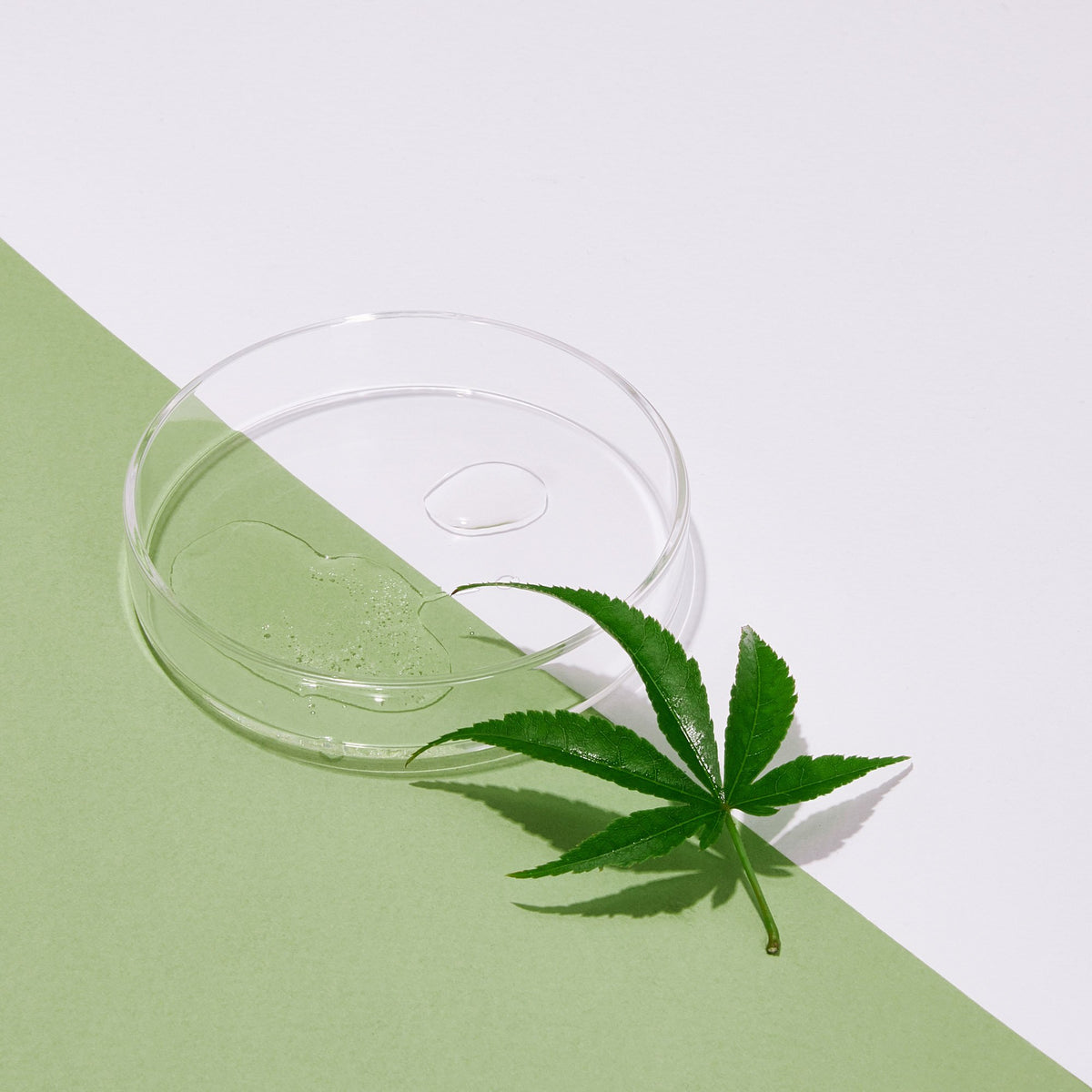 texture image of Andalou Naturals CannaCell Beauty Oil with a hemp leaf