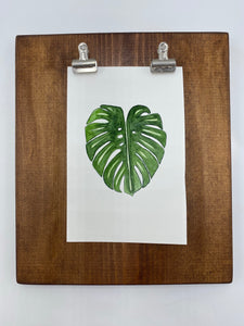 Original watercolor painting - Monstera deliciosa