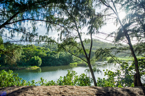 river, kauai, beach, surf spot, hawaii, vacation, board rentals, kahili, kilauea, north shore, rock quarry, rock quarries, bay, fishing, surfing, dogs, rope swing