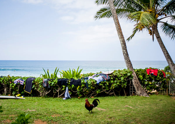 rooster, oahu, pipeline, quicksilver, reef mcintosh, kauai, surfer, view, back yard