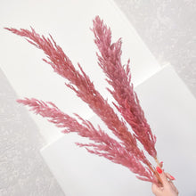Load image into Gallery viewer, Pampas Grass Pink