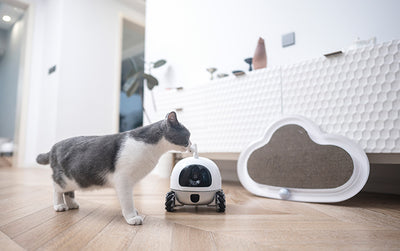 The Rocki Pet Robot – Taking Care of Your Pet, Even While You're Away