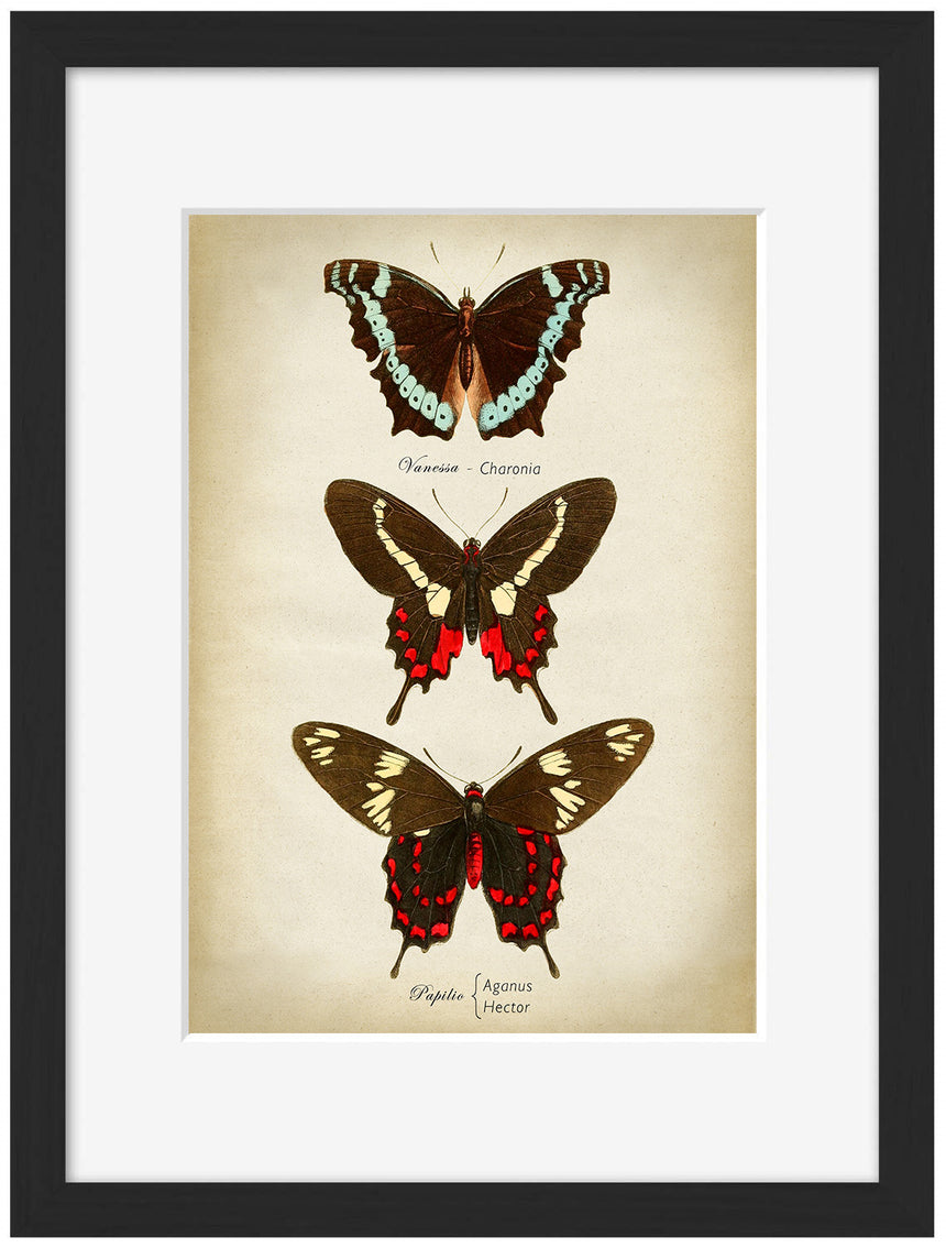 Butterflies Red and Brown - Blue Shaker - Poster Affiche -