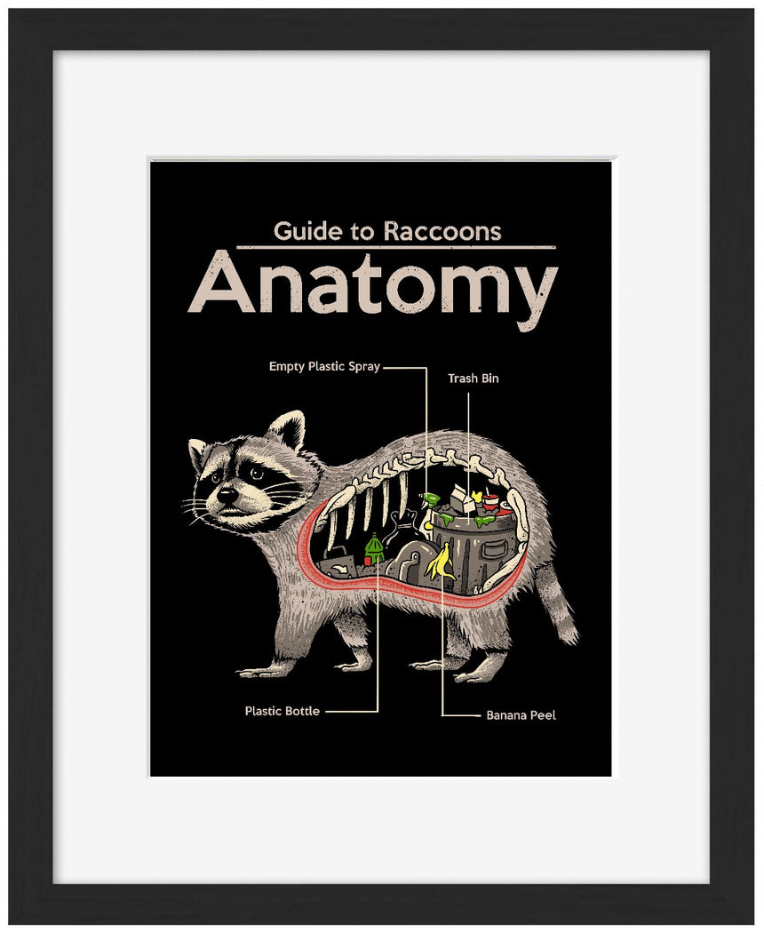 Anatomy of a Raccoon - Blue Shaker - Poster Affiche -