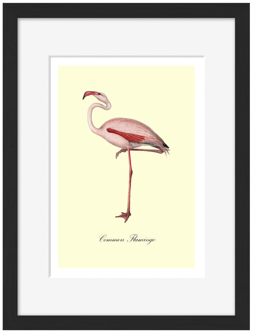 Common Flamingo - Blue Shaker - Poster Affiche -