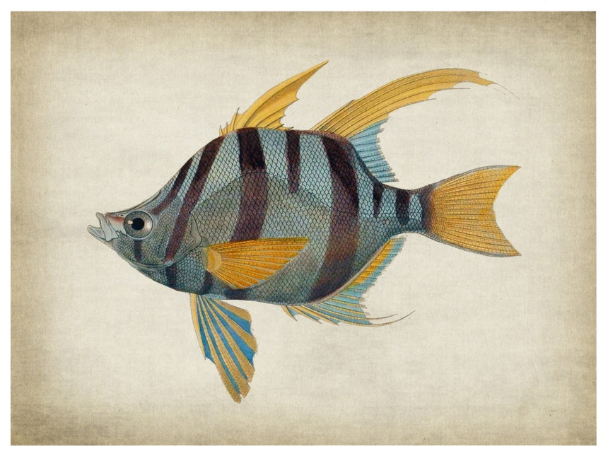 Fish 1 - Blue Shaker - Poster Affiche -