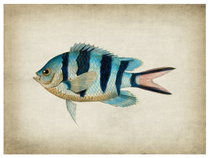 Fish 3 - Blue Shaker - Poster Affiche -