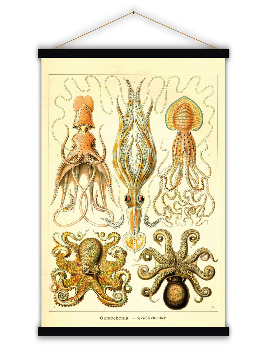 Gamochonia Octopus - Blue Shaker - Poster Affiche -