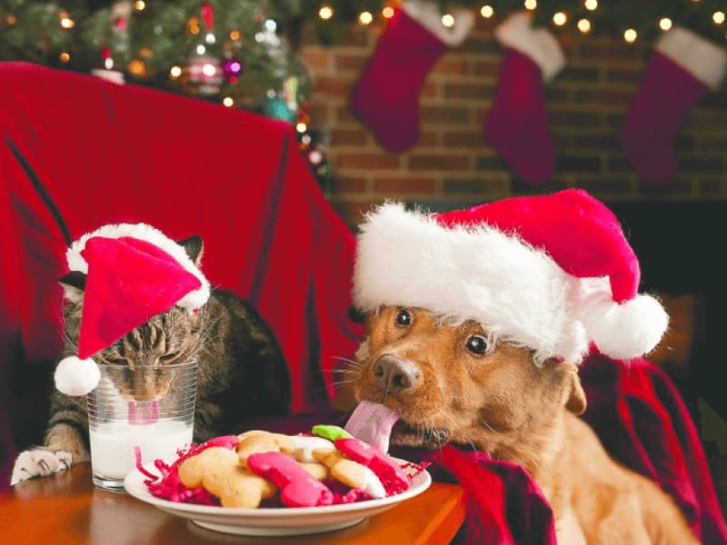 Smart Tips and Strategies for Holiday Pet Safety