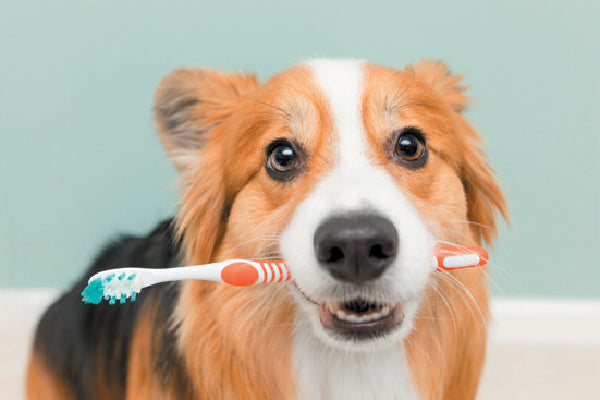 How Can I Improve My Dog's Dental Health?