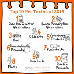 an dogs eat bananas? Graphic showing the ASPCA 2019 Top 10 poisons for dogs.