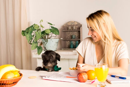 Can dogs eat apples? Woman eats healthy breakfast while dog looks at fruit longingly.