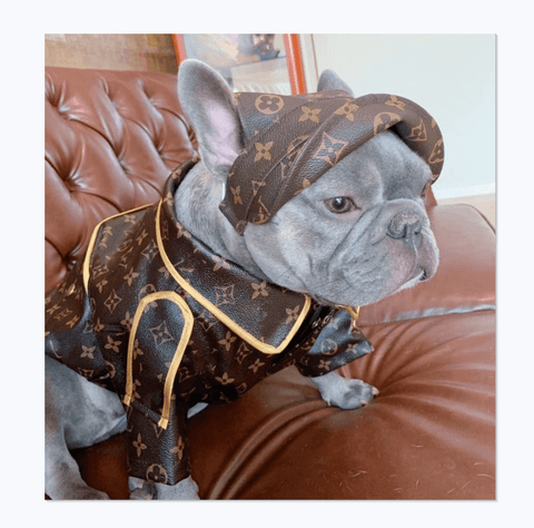 Clothes for dogs include windbreaker jackets with matching hats